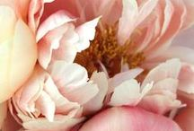 f l o w e r / flowers, petals, blooms / by lindsay