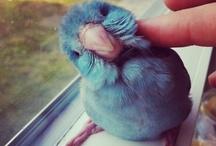 Bird Love / by Jenny Jenkins