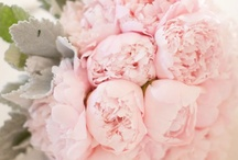 Flowers, Flowers Everywhere / by Jenny Jenkins