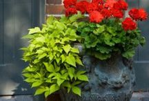 CONTAINER GARDEN... / Containers filled with beautiful plants and flowers... / by Janet Copeland