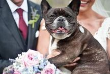 f u r ||| b a b i e s  / animals in weddings / by Love and Anchor Cinematography