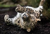 Beautifully Wild Animals / by Kayla Matter