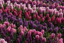 Spring Bloomin' / by Kaylee Schoenfelder