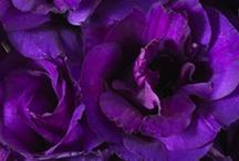 Purples / by Terri Wyatt