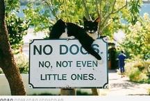 Images de chat parfaits... purrrr.....fect! / by Delyne Nunez