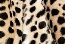 Leopard / by Styleesas Closet