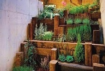 Plants/Gardening / by Allison Ruppert