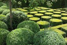 Garden Space /   Gardens / by Eddie Cummings