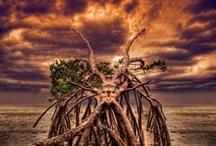 Amazing Florida Photography / by Rosen Hotels & Resorts Orlando, Florida