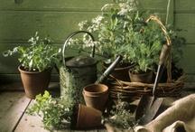 Herbs & Things / by Debbie Dierkes
