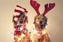 Christmas / by Teanna DiMicco