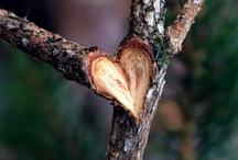 NATURAL HEART / YOU CAN FIND LOVE ANYWHERE :) / by Binah Yadwiga