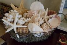 Sea Shells / by Sherri Stepp