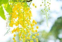 COLOR: Mellow Yellow / by eShakti.com
