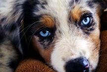 Puppies Close-Up / by DogVacay