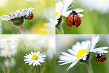 Bumblebees, Butterflies & Ladybugs / by Anna ~