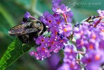 Photography / by Alyssa Jeanine Photography
