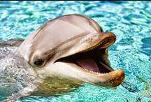 Marine Life / by Suneel Sethi