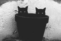 Meow! / by Markéta Azé