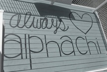 Always Alpha Chi <3 / by Stephanie Elizondo