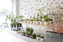 ♥ flower shop / by susana