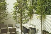 Modern Gardens / by Jennifer Tippett