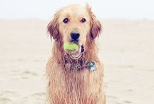 Pups / by Alexi Norton