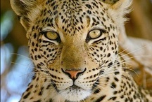 krazy bout big kats too / by Kathy Moncrief