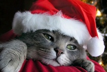 Now we don our pets in apparel / We love to make our pets part of the festivities.  / by Kathy Moncrief