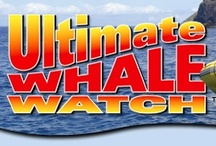 Maui's Best Whale Watches / by Diana Shear Tolin