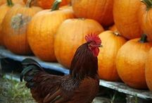 Seasonal photos / by The Patriot Ledger
