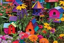 Birdhouses / by Karen Corpe