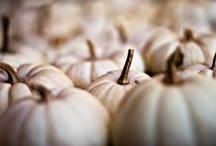 fall/ autumn / by Tricia Everett