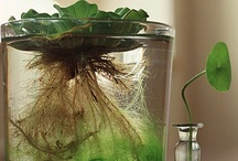 Grow Me A Garden / by Brandi Lovin'Life Powell