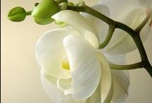 My flowers / by Wanda Cordero