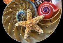 Sea Shells, Stars........ / Sea, Waves and Shells. / by Magda van Niekerk