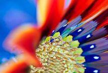 #Flora / by Diario MDZ online