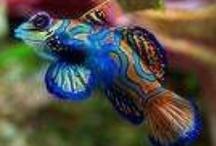 Saltwater Aquariums / by Rhonda Purdie Bishop