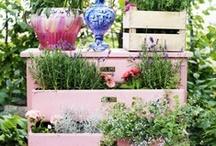DIY Garden Ideas / by Desiree Eaton