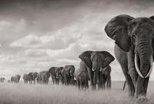 Elephants! / by Deanna Sakal