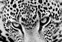 Animal Wonderworld / by Cesar Nunes