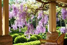 The garden / by Michelle Heidemann