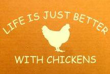 Chickens!! <3 / by Samantha Keller