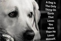 dogs / by Carolyn Vinyard