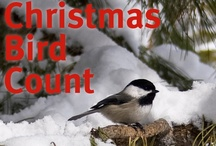 Audubon Christmas Bird Count / Californians from all walks of life will take to the outdoors this holiday season to participate in the 111th annual Audubon Christmas Bird Count, the longest-running wildlife census in the world. Between Dec. 14, 2012 and Jan. 5, 2013, thousands of Californians will transform into volunteer scientists to assess the size of bird populations in local communities throughout the state. / by Audubon California