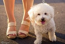 Style Bloggers and their Dogs / Fashion, Puppies... what more could you need? / by Lydia Abate