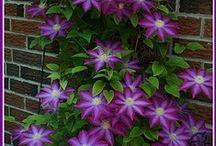 garden beauty / by Susan Hansen