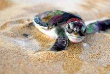 Sea Turtles / by Brittany Selement