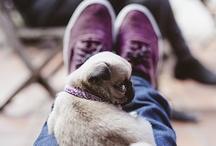 Animals / Pets / by Valentina Puerta