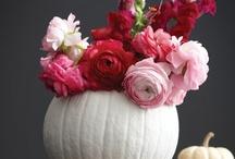 autumn. / by Cait - Pretty & Fun